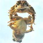 toad with mirrored image