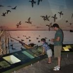 Little boy looking at exhibit displays