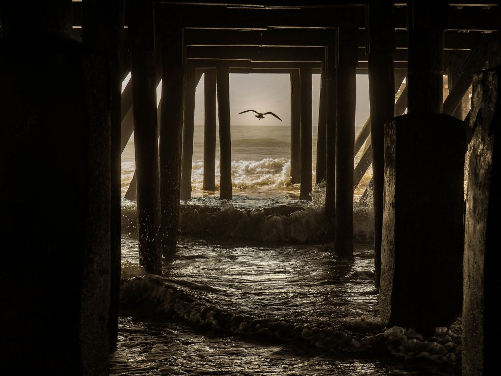 Birds - Best in Category - Under the Pier by Regina Matarazzo