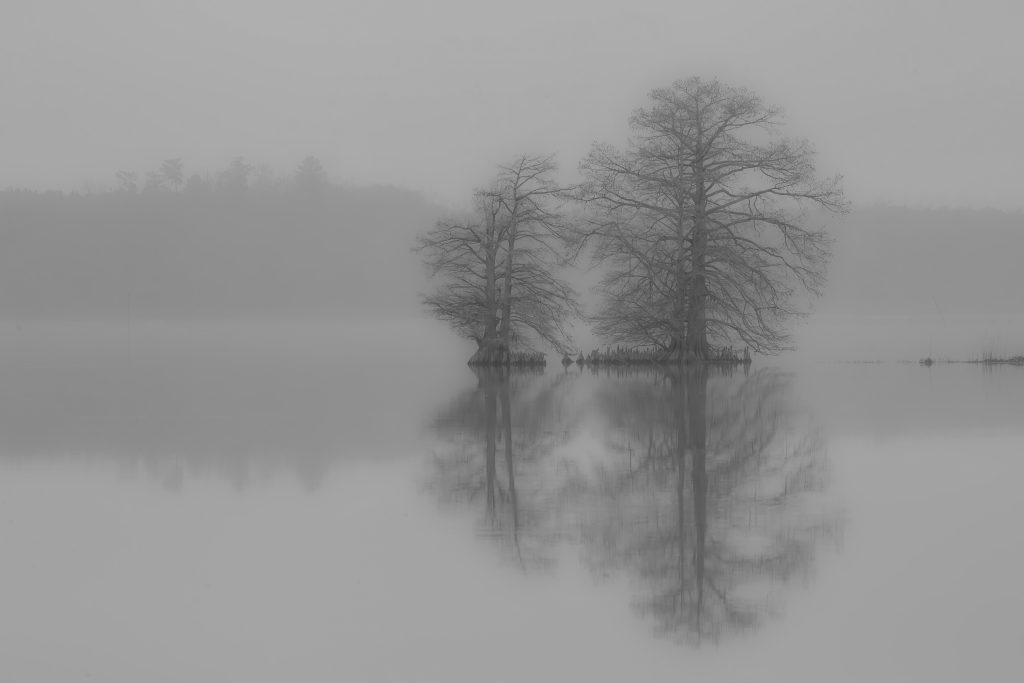 Black and White - Honorable Mention - Foggy Reflection on the Chicahon by Barbara Houston