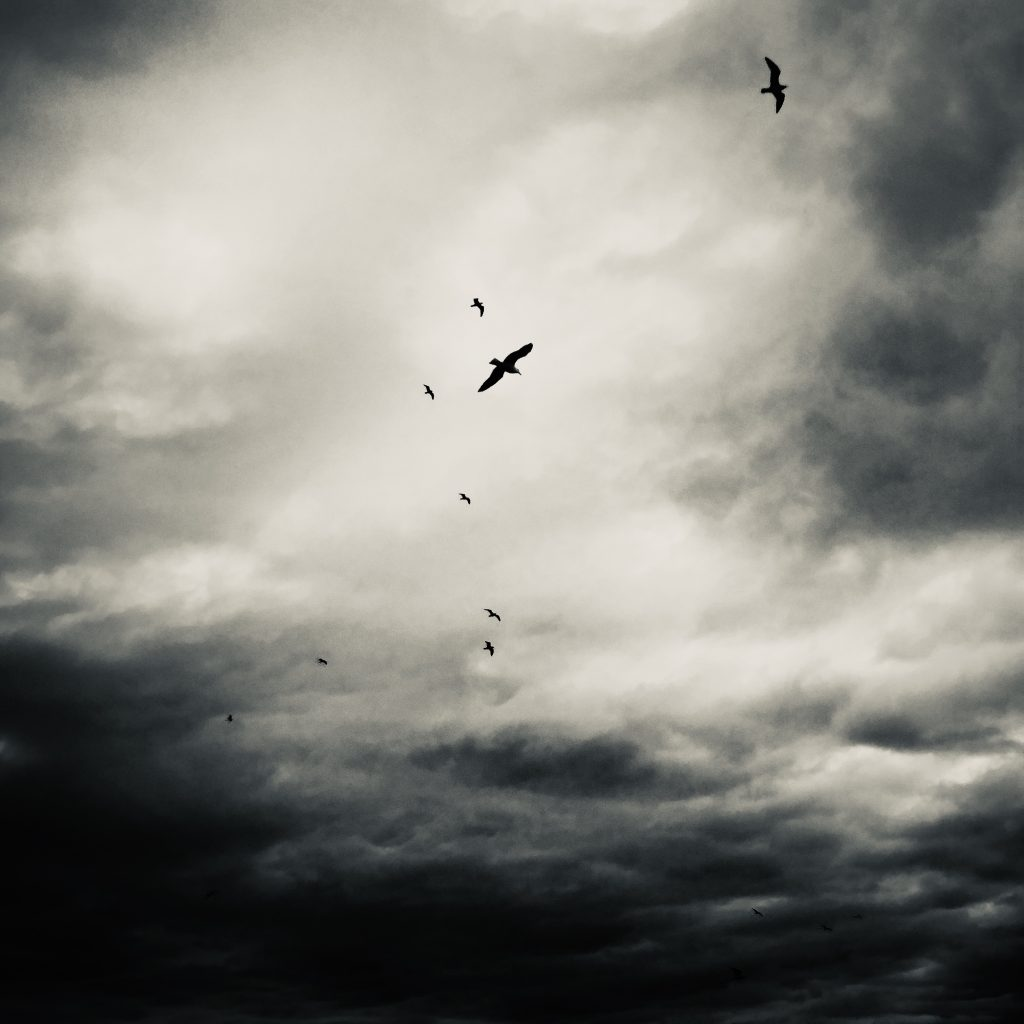 Black And White Honorable Mention Sea Gulls Before The Storm By Julie Peters