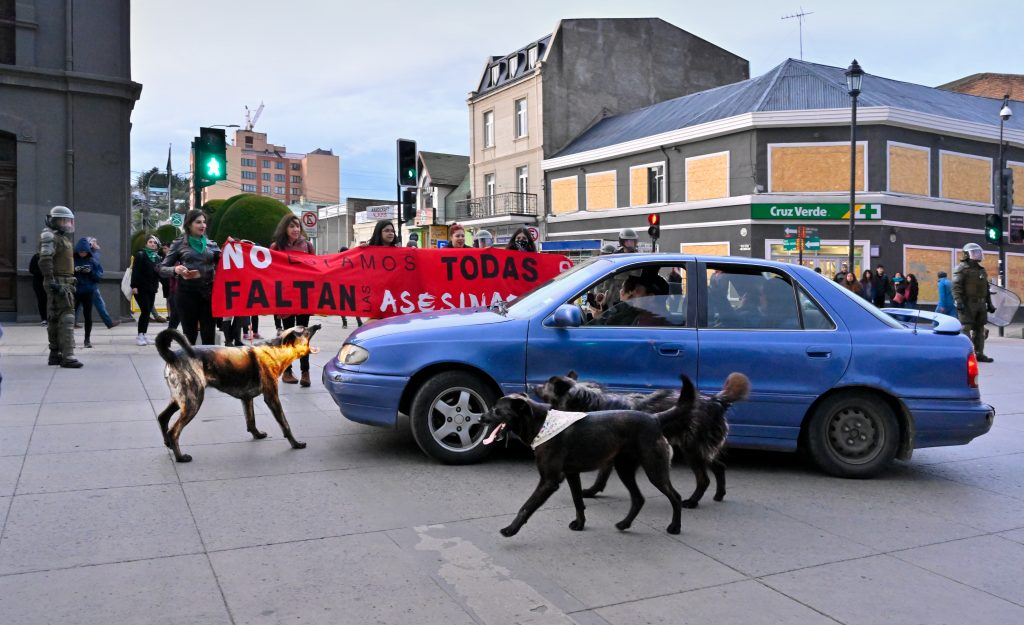 Documentary and Journalistic Photography - Honorable Mention - Protest Dogs by Karl Leck