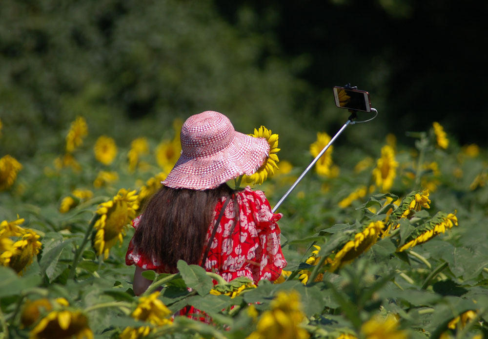 Humans In Nature Honorable Mention Sunflower Selfie By Stefanie Boss