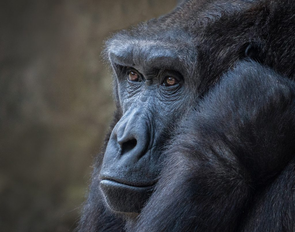 Portrait Photography Second In Category The Thinker By Suzanne Lugerner