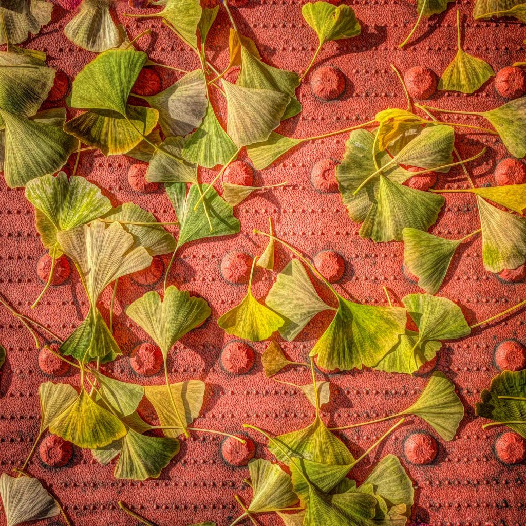 Urban Landscapes Third In Category Ginko Mat By Cam Miller